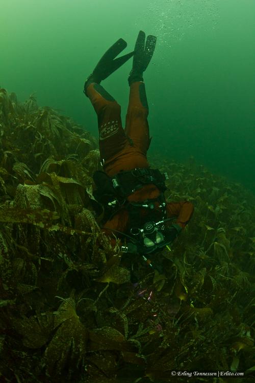 divers-103
