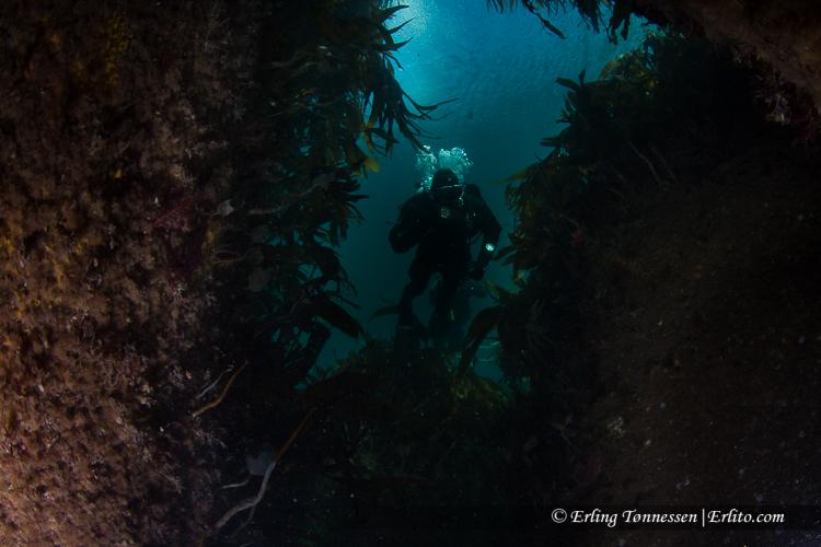 divers-132