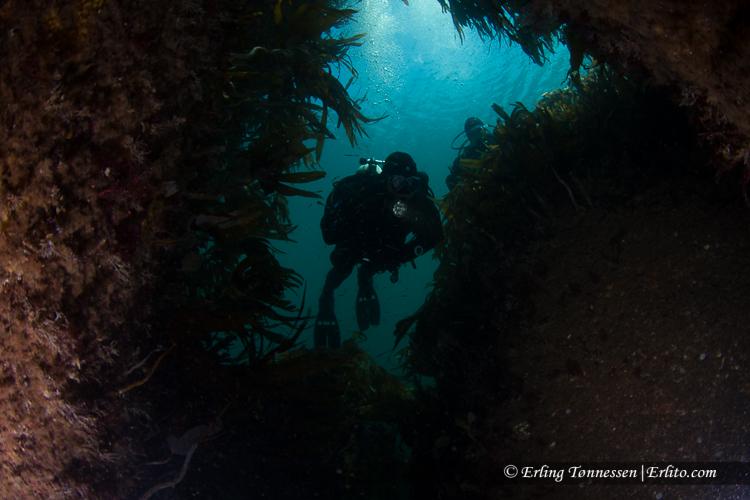 divers-134