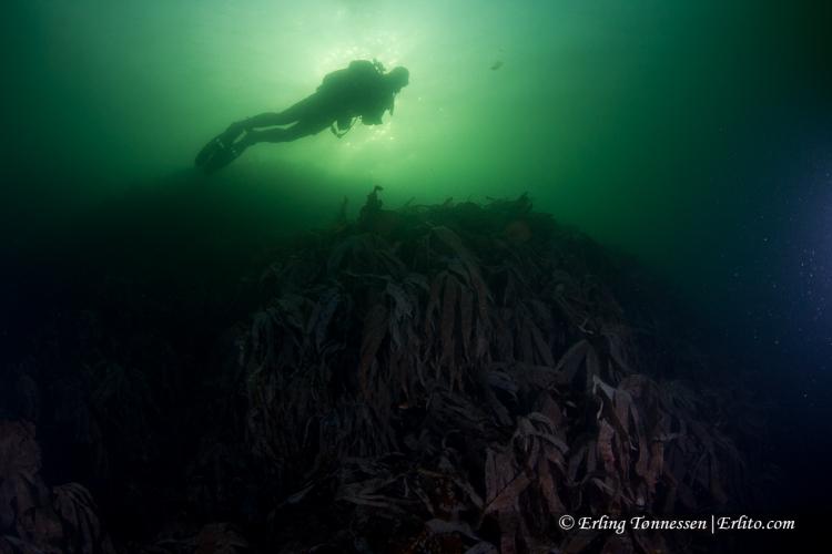 divers-141