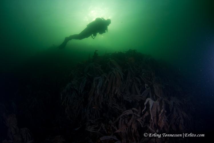divers-142
