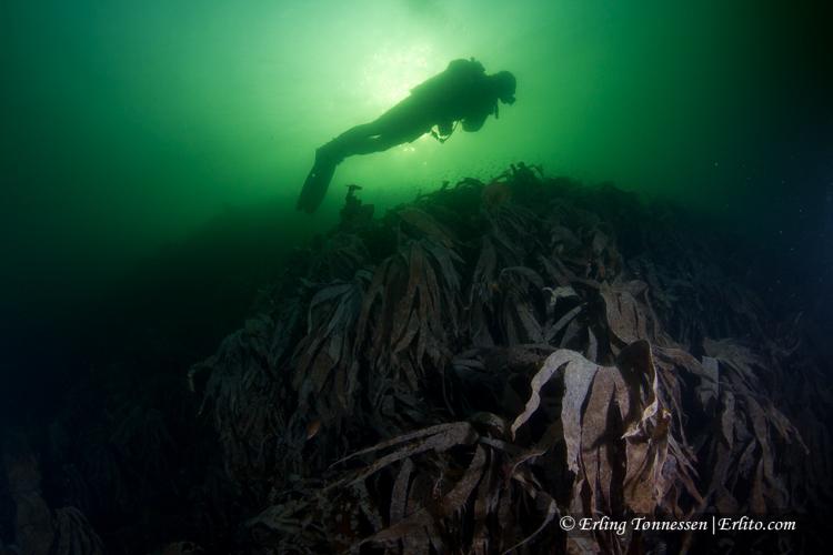 divers-143