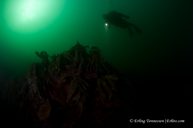 divers-147