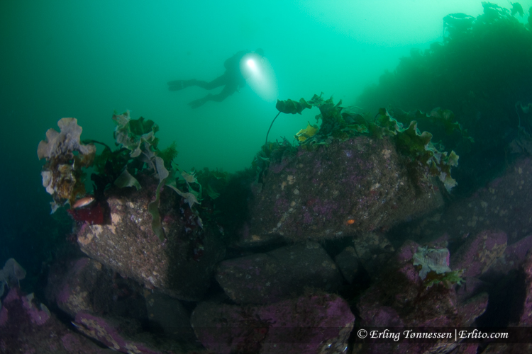 divers-151
