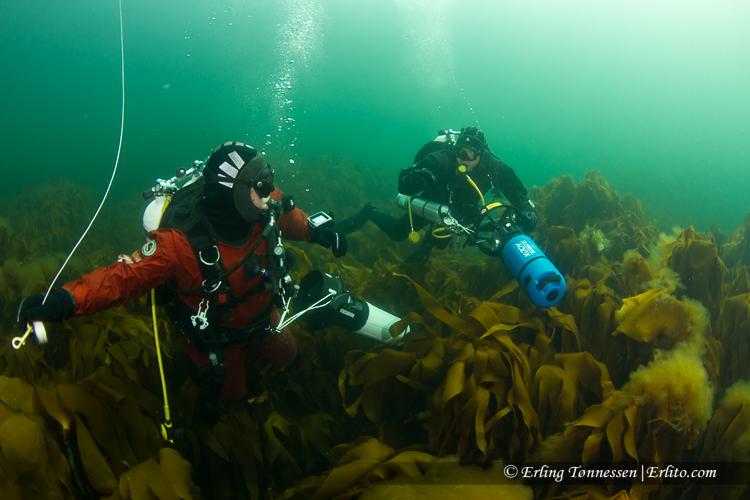 divers-265