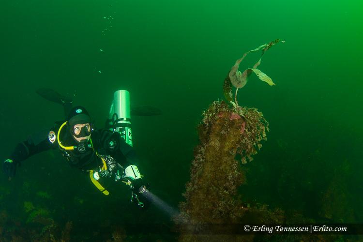 divers-285