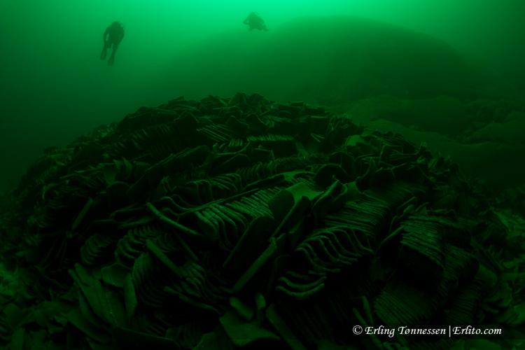 divers-78