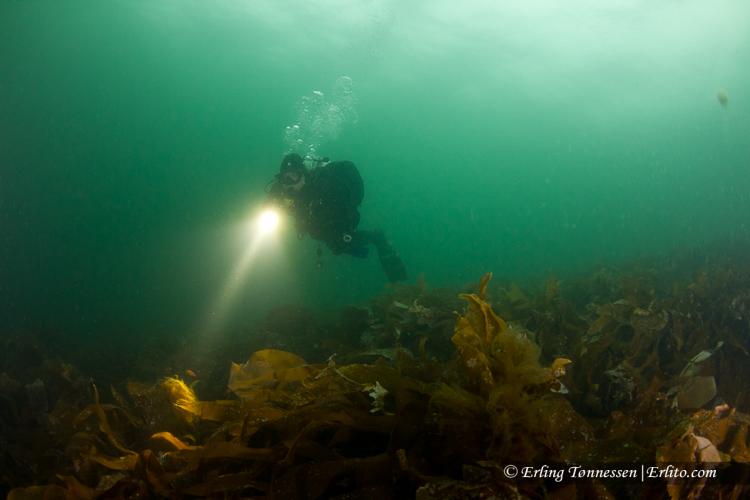 divers-92