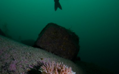 Divebuddy and a searose. Taken at Lindesnes