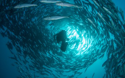 My daughter Semya in the middle of the school of Bigeyed Jackfish. Picture taken at Jemeluk Dropoff. Amed Bali.