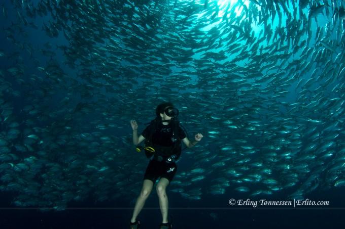 Last dive in Bali.