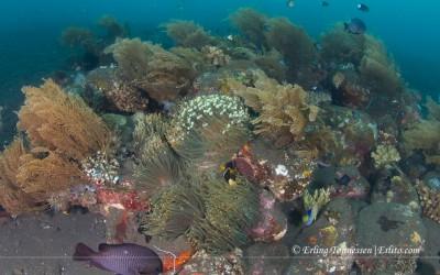 Wideangle picture taken at Nusa penida, Bali