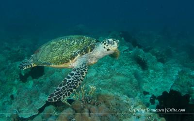Diving Bali-177