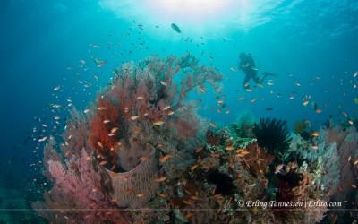 Diving Bali-178