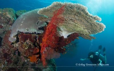 Diving Bali-189
