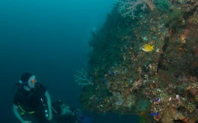 Diving Bali-29