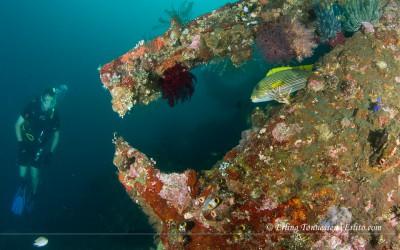 Diving-Bali-37