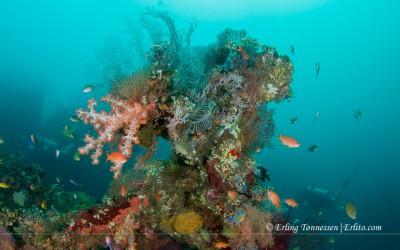 Diving-Bali-47