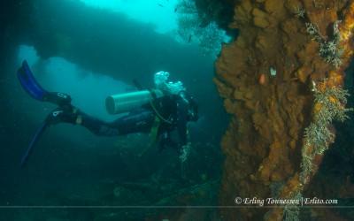 Diving Bali-49