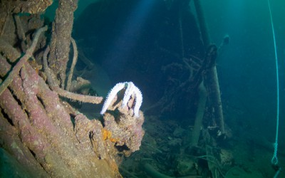Two divers lights up a seastar at the wreck NK02 Dragoner outside of Mandal
