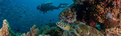 Diving Balicasag & Pamilican
