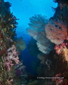 Beautiful underwater scenery @ Koh Tahcai